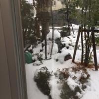 想定外の雪